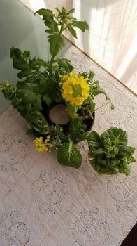 野菜深山.jpg